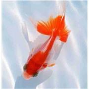 Экран (зашивка) под ванну 1,5 м Золотые рыбки